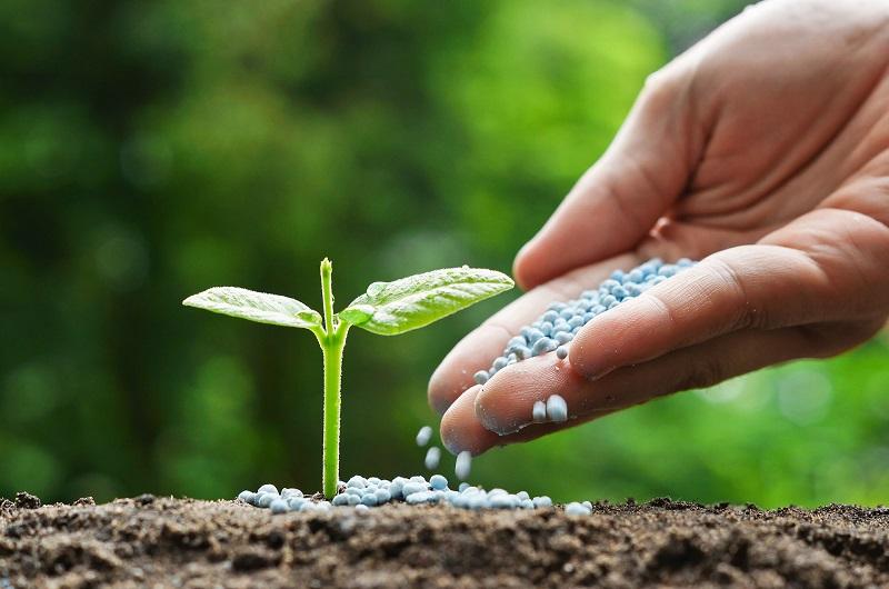 شلون تصنع سماد عضوي وطبيعي للنباتات في المنزل ؟