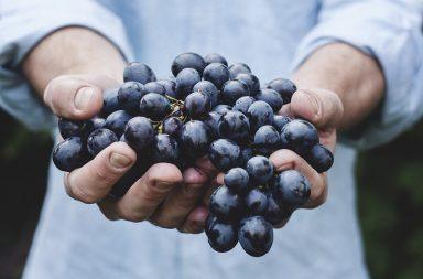 طرق زراعة العنب